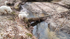 """Going Into The Stream As Jag Thinks About Crossing It On The Log • <a style=""""font-size:0.8em;"""" href=""""http://www.flickr.com/photos/96196263@N07/14209652323/"""" target=""""_blank"""">View on Flickr</a>"""