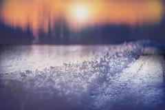 winter road (irina_escoffery) Tags: