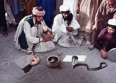 3392 Snake charmers--Rawalpindi , Pakistan (ngchongkin) Tags: pakistan cobra musictomyeyes autofocus rawalpindi thegalaxy frameit vivalavida flickraward flickrbronzeaward heartawards goldstaraward earthasia thebestofday gnneniyisi worldofdetails wonderfulasia buildyourrainbow blinkagain niceasitgets thelooklevel1red infinitexposure buildyourrainbowl2 visionaryartsgalery