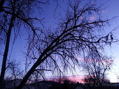February 7, 2015 - A pastel sunset in Thornton. (LE Worley)