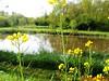 "15-05-2010  Hoornaar 41 Km (17) • <a style=""font-size:0.8em;"" href=""http://www.flickr.com/photos/118469228@N03/15971156504/"" target=""_blank"">View on Flickr</a>"