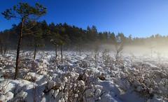 Winter bog (Anders Toomus) Tags: winter vinter sweden bog dis talv myr rootsi raba canon7d uduvine lovedslr