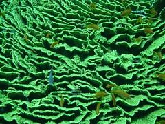 NOCPHOTO SHARM 2015 101 (nocphoto) Tags: underwater turtle sony redsea dive egypt scuba wreck lionfish sharm morayeel thistlegorm underwaterphotos nammabay cameldive corkcameragroup nocphoto