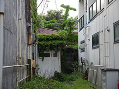 The Cross (CentipedeCarpet) Tags: green japan four photos decay kamakura panasonic micro  unlimited  decayed thirds urbex  gx8  1235mmf28