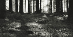 Forest XIV (imagomagia) Tags: wood morning trees light blackandwhite art nature monochrome forest spring fineart naturallight monocromatic fujifilm cinematography bnw jnkping fineartphotography blackandwhitephotography magicrealism artphoto magicalrealism artphotography