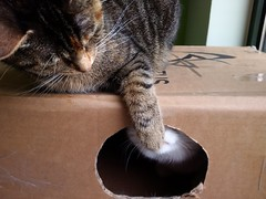 box for 2 (francesca.clemente) Tags: cats lake bird leuven cat la losangeles spring belgium belgie box think francesca birdwatching gatti smelly clemente mannekenpis neerijse fuky