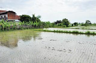 bali nord - indonesie 69