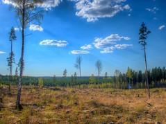 Nkym Hermanonkimaantielt (MikeAncient) Tags: sky clouds suomi finland geotagged spring hdr pilvet mntsl kevt taivas tonemapped tonemap hakkuu