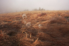 Winter Morning on Round Bald (R. Keith Clontz) Tags: winter fog morninglight angelica fogg foggymorning roanmountain treesilhouettes roundbald rkeithclontz icymeadow calsamtrees