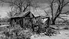 Ruined house, Oasis, CA (joeqc) Tags: california ca blackandwhite bw black tree blancoynegro monochrome canon mono cabin shack 6d fishlake greytones 3217 rurex ef24105f4l oncewashome lonex