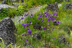Mai Botanik - 2016-0027_Web (berni.radke) Tags: may growth mai botany botanicalgarden mnster botanik botanischergarten wachstum