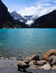 Bear at Lake Louse (myphotothrowaway) Tags: mountain lake mountains hiking lakes glacier louise alberta rivers backcountry banff canmore
