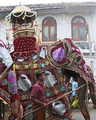Kandy Perahera (IMG_3696b) (Dennis Candy) Tags: street red elephant heritage festival day culture buddhism parade holy sacred srilanka ceylon procession colourful tradition serendipity hinduism kandy relic perahera serendib caparison serendip esala