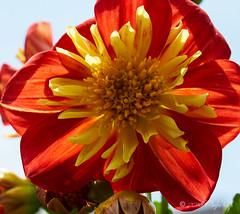 Spring Flowers (Pedja Photo (Pedja G)) Tags: flowers colors spring sony sonyalpha 1650mm pedjag pedjaphoto sal1650 a77ii dt1650mm28ssm
