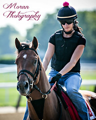 Casse Trainee (EASY GOER) Tags: park horses horse sports belmont racing races thoroughbred equine