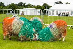 cricket_2015-59.jpg (Fingal County Council) Tags: fingal newbridgehouse flavours donabate pwp flavoursoffingal fingalcoco fingalcountycouncil