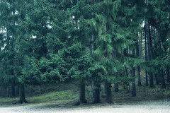 (derkleinebiber) Tags: trees tree green nature forest germany landscape schweiz natur wiese wanderlust fir landschaft wald preserve brandenburg conifers firs conifer naturpark naturschutzgebiet waldrand nadelwald mrkische mnchehofe flugsanddne