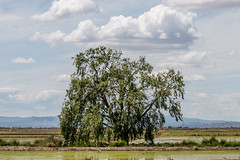 67Jovi-20160529-0077.jpg (67JOVI) Tags: valencia albufera sueca marjalsur arrozalesconagua
