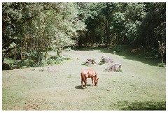 El Capitan (Patrick J. Negwer) Tags: dog naturaleza verde green dogs nature water rio river waterfall ecuador agua perro perros cascadas mindo nambillo