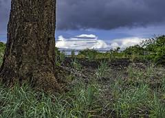 Colour contrast (Tony Tomlin) Tags: canada clouds britishcolumbia crescentbeach southsurrey crescentbeachbc