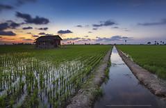 kampung sungai sireh (gilbertchuachian_siong) Tags: world sunset sky house reflection nature water landscape asia village dusk sony malaysia aasia selangor sawah samyang a6000