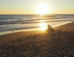 Jugando con la luz (nO_VR) Tags: sea sun luz sol beach girl mar juegos streetphotography playa olympus arena ligth postal  sonne  gne   eguzkia zuico olympusomd olympusomdem5markii zuico1250mm