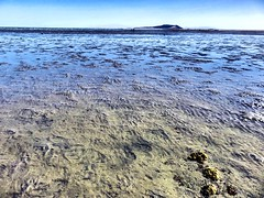 IMG_0178 (Tina A Thompson) Tags: sonora seashells mexico sealife seashell marinebiology tidepools seaofcortez marinelife chollabay mexicobeaches chollabaymexico