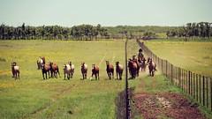 Life's A Dance (It Feels Like Rain) Tags: ranch horses westtexas horsebackriding equine hff lifesadance happyfencefriday