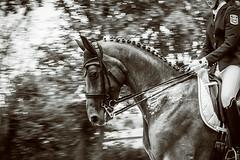 dressage (feldweg) Tags: horse sport caballo cheval riding cavallo pferd horseback turnier reiten hest mv kon mecklenburgvorpommern dressage 2016 dressur landesmeisterschaften redefin
