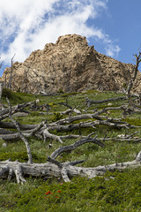 Dead Trees and Geology on Spot Mountain (GlacierNPS) Tags: glaciernationalpark montana twomedicine nature outdoors nps nationalparks spring