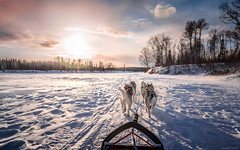 Life is beautiful (camel.arnaud) Tags: traineau sled sleddog chien canada qubec husky malamute eskimo esquimau mistassini river rivire winter hiver sony a65 alpha65 sunset