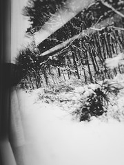 On the Train to Takayama 9 (Jon-F, themachine) Tags: winter snow nature japan asian outdoors asia olympus  nippon japo oriental orient  fareast  gifu   nihon omd onthetrain japn 2016  m43  mft    mirrorless   micro43 microfourthirds  ft xapn jonfu  mirrorlesscamera snapseed   em5ii em5markii  giftken