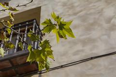 Toledo (Juan R. Ruiz) Tags: city espaa plants naturaleza holiday streets eos spain europa europe natural pueblo cities toledo towns canoneos pueblos calles capitals canon60d canoneos60d