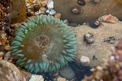 20100102_Corona_del_Mar_0003.jpg (Ryan and Shannon Gutenkunst) Tags: ocean ca usa shells water rocks coronadelmar seaurchin coronadelmarstatebeach