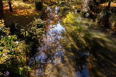 Shadows Water and Leaves (Jocey K) Tags: autumn trees newzealand christchurch sky plants reflections river shadows may avon monavale avonriver dappledlight