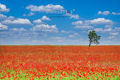 Amapolas Town (atdesantos) Tags: sky naturaleza nature landscape paisaje olympus campo amapolas omdem10