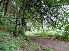 Im Wald (onnola) Tags: summer tree forest germany deutschland path sommer wald baum beech koblenz weg rheinlandpfalz pfad buche rhinelandpalatinate arzheim wintersborn