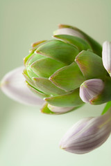 IMG_2836-3 (nancyrodeberg) Tags: macroflowers