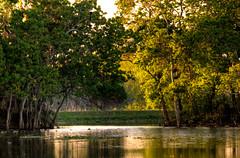 Sunset on 40-Acre Lake (ap0013) Tags: statepark park sunset usa lake water america nikon texas state bend tx tex 40 acre brazosbend brazos d90 nikond90 40acrelake brazosbendtexas