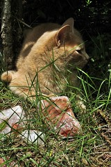 alfie my friend (❀abby❀) Tags: green grass vertical digital cat quality vanth qualityphotography verticalphotography