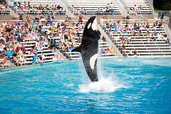 HB to SD-62 (Nolte Photo) Tags: california water canon sandiego crowd fishtank orca bleachers seaworld shamu killerwhale 60d canoneos60d eos60d