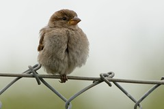 Balance. (stonefaction) Tags: nature birds st scotland andrews fife wildlife crail balcomie