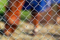 Stabled pet horse behind fence, rural Australia (Robert Lang Photography) Tags: horse pet nature animal horizontal fence wire stock australia nopeople outoffocus eat fencing feed hay southaustralia stable contained portlincoln saddlery stockfeed ruralaustralia eyrepeninsula stabled stabledpethorsebehindfence