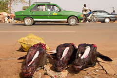 Cow heads in the streets of Ouagadougou, Burkina Faso. (cookiesound) Tags: africa trip travel inspiration streets travelling canon dead photography buffalo reisen fotografie display market taxi documentary deadanimal afrika markt slaughterhouse ouagadougou burkinafaso travelphotography traveldiary cowhead marketlife travelphotographers cookiesound nisamaier ulrikemaier ullimaier reisefotografen
