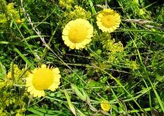 Parco nazionale della Majella. (Aldo433) Tags: flowers italy mountain italia natura erba fiori montagna abruzzo appennino bosco maiella ortona parconazionaledellamajella