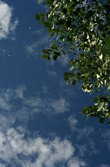 Emitting Eternal Light (Miss Marisa Renee) Tags: blue light summer sky sunlight white color green nature leaves vertical night clouds digital canon stars daylight colorado day skies afternoon cloudy doubleexposure unique colorphotography creative sunny bluesky september multipleexposure astrophotography cottonwood ethereal dreamy mywork connected emit cosmic starry connection speckled eternal digitalphotography digitalmanipulation starlight digitaldoubleexposure emitting canon400d canoneosxti marisarenee