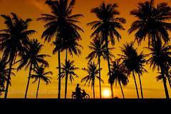 great sunset and tree silhouette (sydeen) Tags: travel blue sunset summer vacation sky orange sunlight tree nature beautiful silhouette sunrise landscape paradise ride sundown coconut dusk background sunny scene palm tropical motorcycle