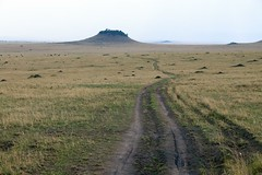 Masai Mara (Christopher.Michel) Tags: kenya lion cheetah masaimara christophermichel elephantchristophermichel