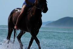 Bareback (Jodie Maria) Tags: ocean sea horse beach power muscle free trust splash rider