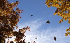 bye bye summer (Lalallallala) Tags: autumn sky leaves suomi finland leaf helsinki autumncolours